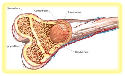 عمليات زراعة نخاع العظام